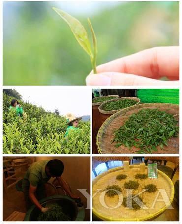 亲眼见证茶叶的制作过程