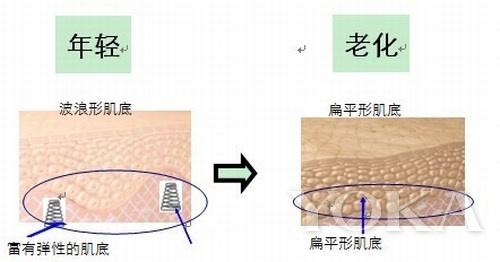 肌底层的弹性结构决定了皮肤的状态